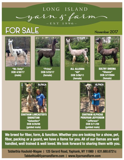 llama-and-alpaca-november-2017.png